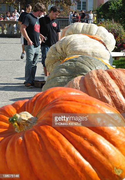 Participants in German Pumpkin Championship stand next to giant pumpkins lined up for the jury in the park of the Residence Castle in Ludwigsburg...