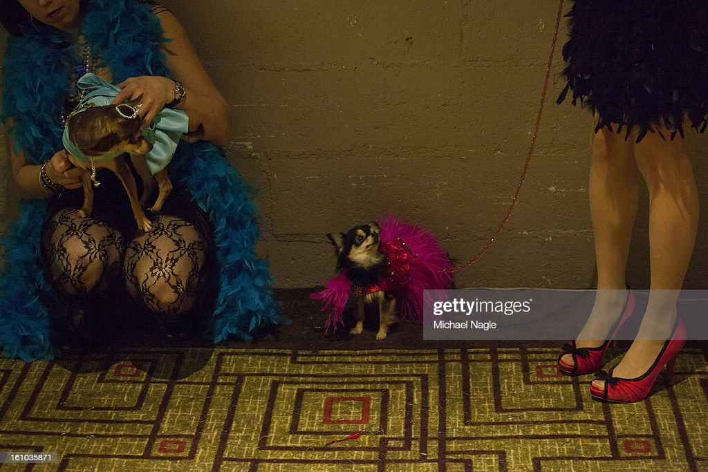 Participants in the New York Pet Fashion Show line up backstage at Hotel Pennsylvania ahead of next week's Westminster Kennel Club Dog Show on February 08, 2013 in New York City. The Westminster Kennel Club Dog Show first held in 1877, is the second-longest continuously held sporting event in the U.S., second to the Kentucky Derby.