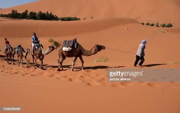 Participants of the Nosade desert tour are riding dromedaries through the Erg Chebbi desert near Merzouga Morocco 10 November 2015 The tour operator...