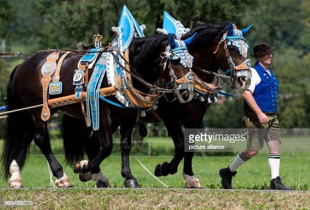 Participants of the traditional 'Rosstag' pass by meadows and mountains at the Tegernsee lake in Rottach-Egern, Germany, 27 August 2017. Dozens of...