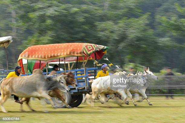 Participants race on ox carts during 13th Elephant Festival celebrated in Sauhara, Chitwan, Nepal on Wednesday, December 28, 2016.