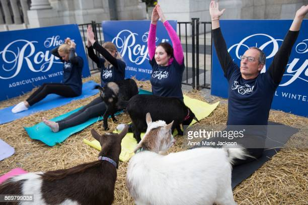 Participants take part in a session of goat yoga to stretch and celebrate as the 95th Royal Agricultural Winter Fair trots into Toronto