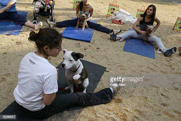 Participants take part in 'Ruff Yoga' a monthly class for Yoga enthusiasts and their canine companions put on by Crunch Gym May 29 2003 at Madison...