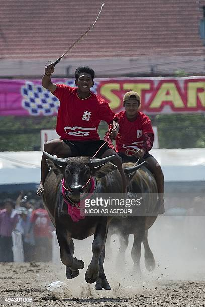 Participants take part in the annual buffalo races in Chonburi southeast of Bangkok on October 26 2015 Scores of Thai farmers ditched their paddy...