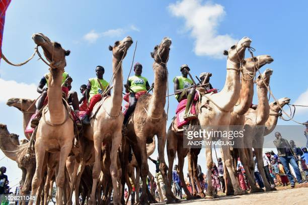 Participants wait the start of the 21 kilometers professional camel race during the 29th edition of Maralal International Camel Derby at Maralal...