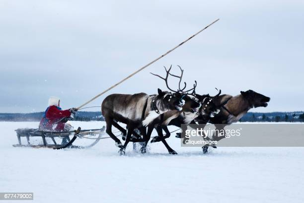 participating in reindeer herder festival - cliqueimages stock pictures, royalty-free photos & images