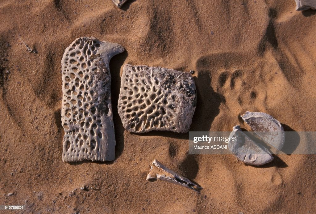 FOSSILES SUR LE SITE DE GADOUFAOUA, DESERT DU TENERE, NIGER : News Photo