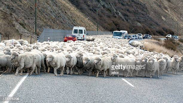 Parting a sea of Sheep
