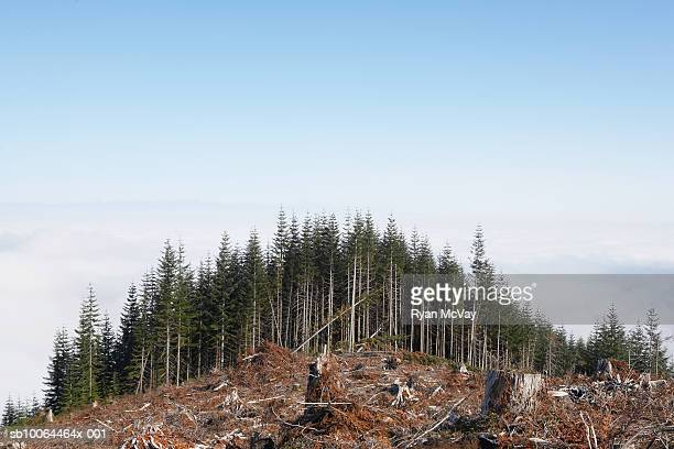 partly deforested hill - deforestation stock pictures, royalty-free photos & images