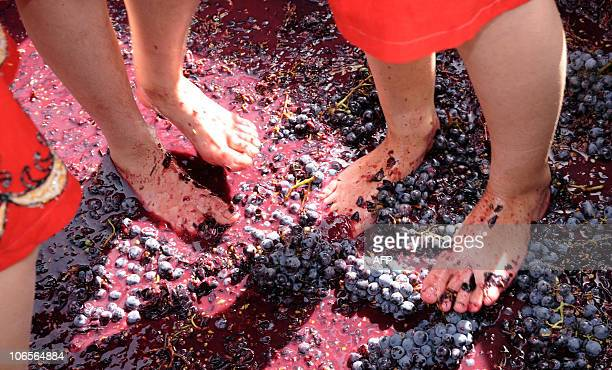 Partly seen Armenian girls tread grapes with bare feet during a wine festival in the village of Areni some 100 km of the capital Yerevan on October...
