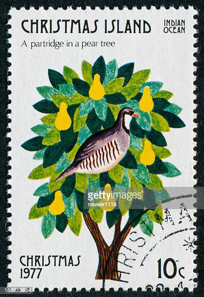 partridge in a pear tree stamp - 12 days of christmas stock pictures, royalty-free photos & images