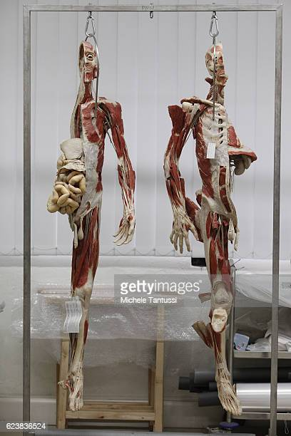 Parts of plastinated human bodies stand on shelves during a plastination process by the 10th anniversary celebration of Gubener Plastinate GmbH the...