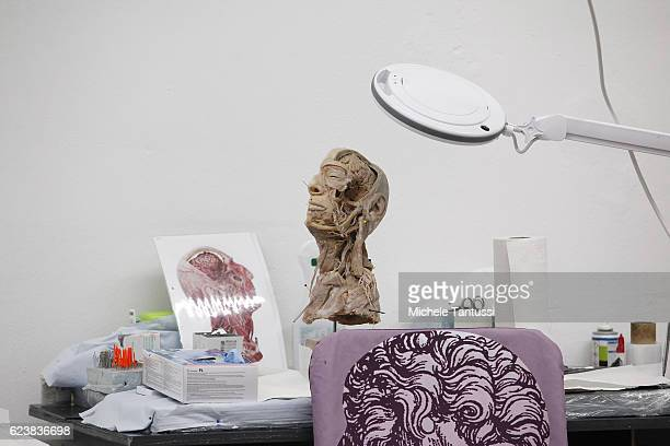 Parts of plastinated human bodies stand on shelves during a plastination process by the 10th anniversary celebration of Gubener Plastinate GmbH, the...