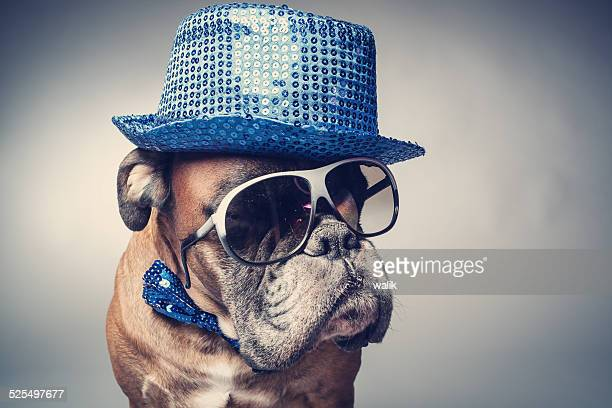 party dog - practical joke stock photos and pictures