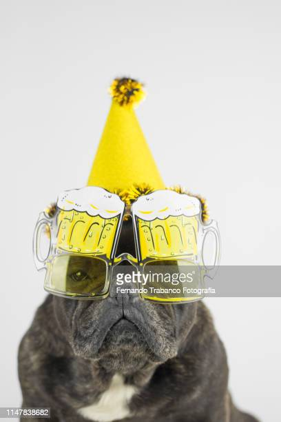 party dog with glasses of beer - passed out drunk stock pictures, royalty-free photos & images