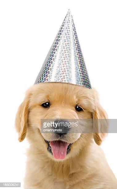Grupo de cachorros de perros, usando, gorro de fiesta plata