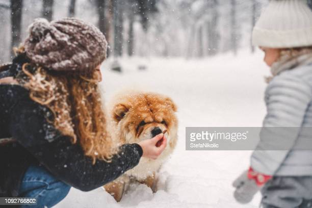 party time in snow - chow dog stock pictures, royalty-free photos & images