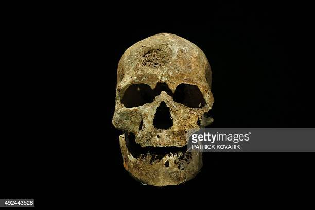 Pascale MOLLARD A picture taken on October 13 2015 shows the skull of a CroMagnon man at the Musee de l'Homme in Paris The museum dedicated to all...