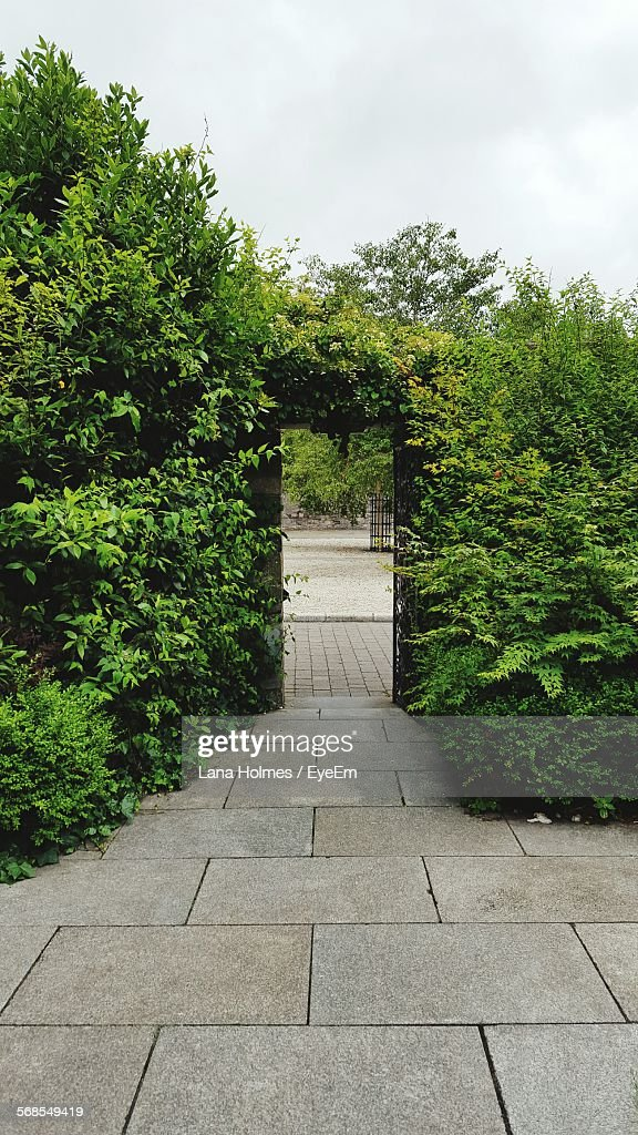 Passage Leading Towards Door Covered With Ivy In Park : Stock Photo