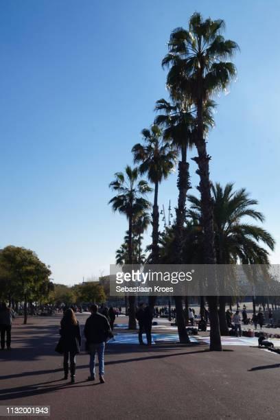 Passeig de Joan de Borbó with Palm Trees, Barcelona, Spain