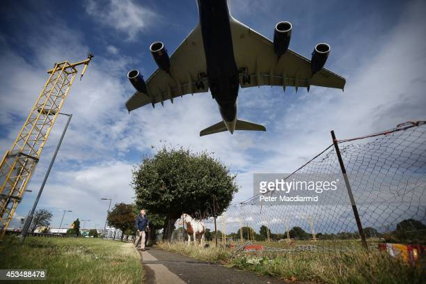 A passenger plane comes into land over a field containing horses at Heathrow Airport on August 11 2014 in London England Heathrow is the busiest...