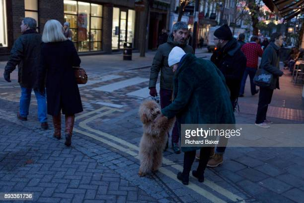 A passerby fusses over a pet Cockapoo dog in Seven Dials near Covent Garden on 12th December 2017 in London England