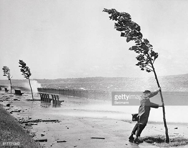 Passerby holds on to a tree for support as hurricane swept waves hammer the sea wall adjacent to the Belt Parkway near 72nd Street in Brooklyn. The...