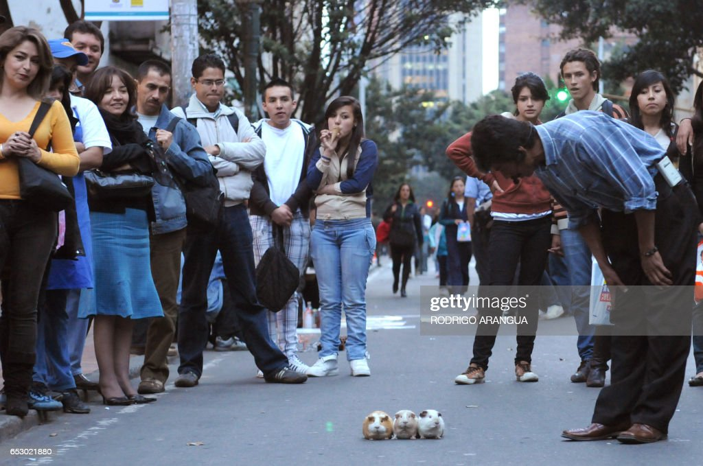 Passers-by bet during a 'race' of Guinea pigs during a public performance along Septima (Seventh) avenue in downtown Bogota March 13, 2009. Scores of street artists entertain the public along thirteen blocks of the avenue every Friday. AFP PHOTO/Rodrigo ARANGUA /