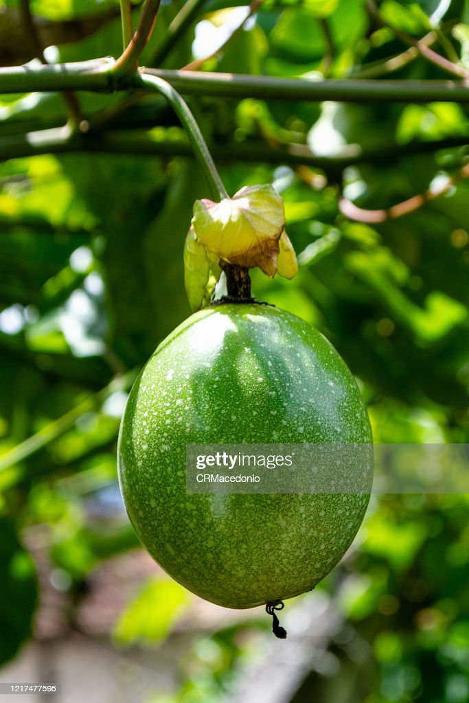 Passion fruit. : Stock Photo