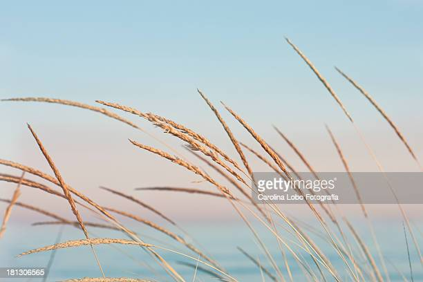 5 143 Pastel Beach Photos And Premium High Res Pictures Getty Images