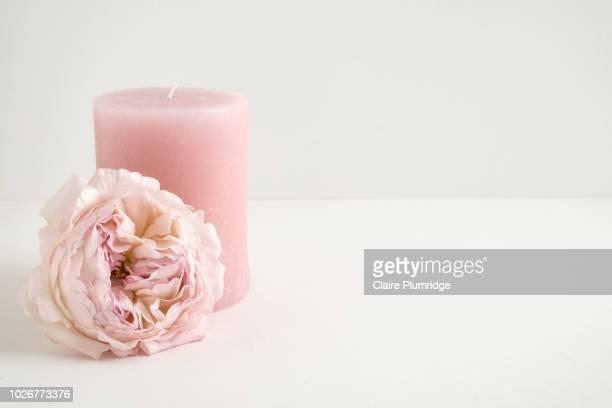 pastel - beautiful pink rose - ローソク ストックフォトと画像