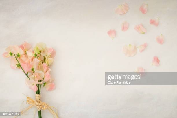 Pastel - Overhead view, styled stock image of pretty bunch of pink/coral coloured sweet peas on a grey watercolour effect background