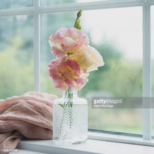 pastel - pretty pastel coloured lisianthus flowers, in a china vase on a window ledge. next to a pink muslin scarf. - 花瓶 ストックフォトと画像