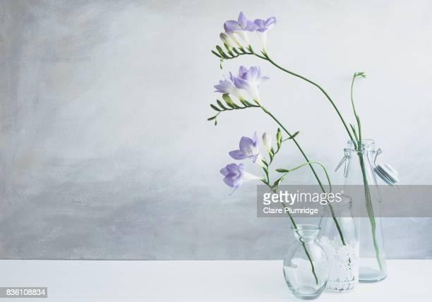 pastel - purple freesia - 茎 ストックフォトと画像