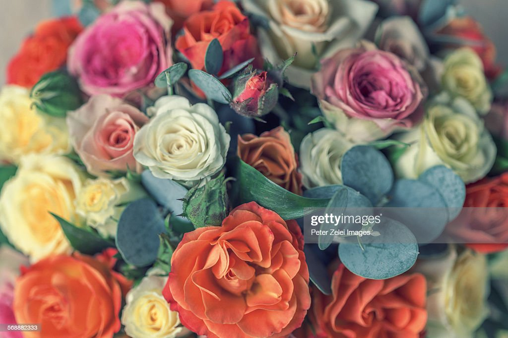 Pastel roses background : Stock Photo