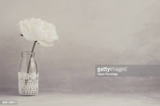 pastel - white peony - claire plumridge stock pictures, royalty-free photos & images