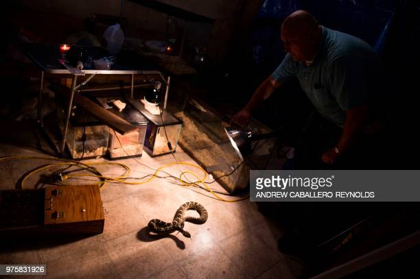 Pastor Chris Wolford checks on a timber rattlesnake before a Pentecostal serpent handlers service at the House of the Lord Jesus church in Squire...