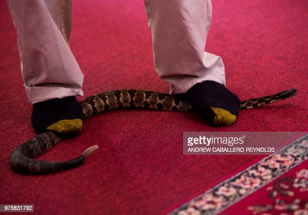 Pastor Chris Wolford steps on a timber rattlesnake during a Pentecostal serpent handlers service at the House of the Lord Jesus church in Squire West...