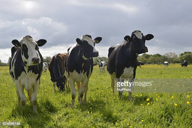 Pastoral farming is the rearing of livestock in the agricultural industry This is a common form of farming in the north of England due to a number of...