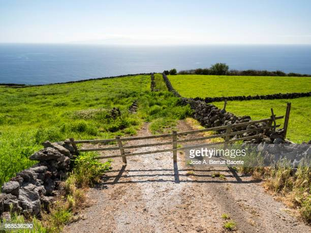 Pastoral landscape, green fields and plows for cultivation separated by stone walls and dirt road cut by a fence of wood in Terceira Island in the Azores islands, Portugal.