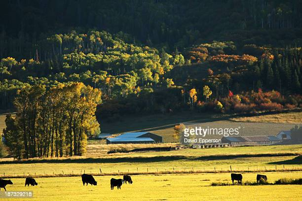pastoral ranch lands in colorado - steamboat springs colorado stock photos and pictures