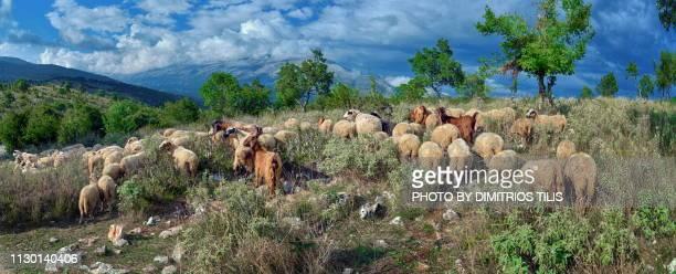 Pastoralism at Dolo's environs panorama 2