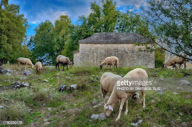 Pastoralism at Holy Monastery of the of the Virgin Mary's birth(1736) 2