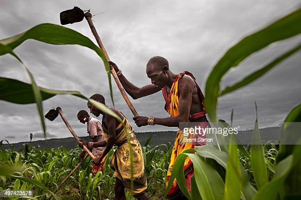 Pastoralist Maasai prepare a field of Maize in Orngayanet Kenya 22 February 2010 Crop cultivation is a relatively new thing for the Maasai and is a...