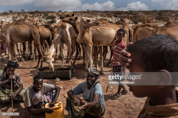 Pastoralist men and boys let their camels drink water from a nearly dried up riverbed on February 24 2017 in Dhudo Somalia People travel up to 75...