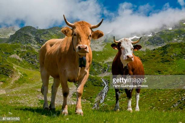 Pastural in the french Alps, Isere, France