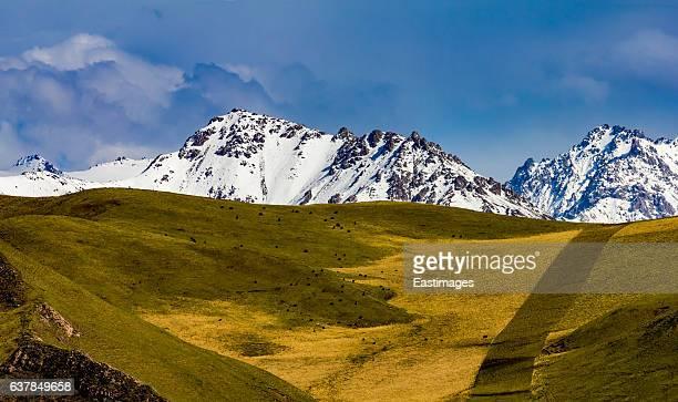 Pasture and snow capped Qilian mountain range /Qinghai-Tibet Platea,China.