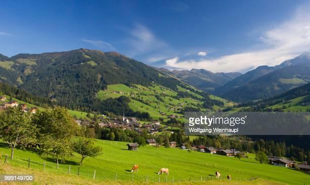 pasture, cows, kitzbuehel alps, alpbach valley, alpbach, tyrol, austria - tal stock-fotos und bilder