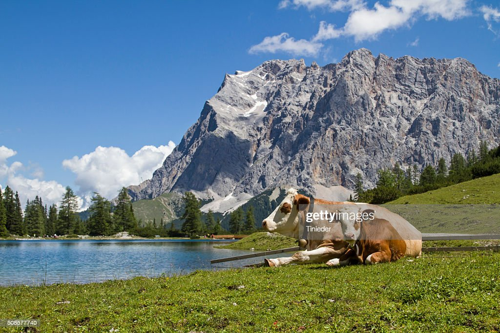 Pasture idyll on Seeebensee lake : Stock Photo