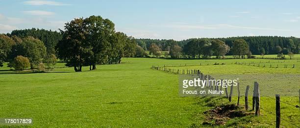 Pasture landscape, near Stavelot, Belgium